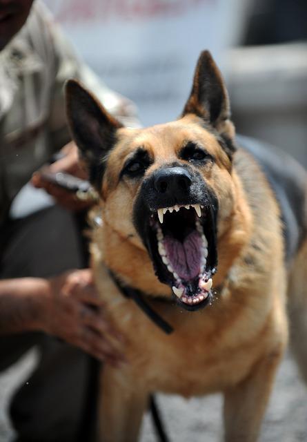 dog attack safety
